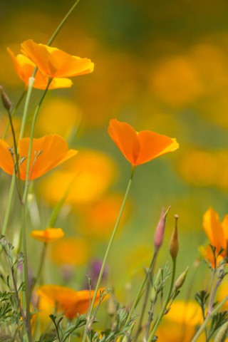 Красивые картинки цветов на телефон - скачать прикольные и классные 4