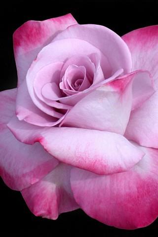 Красивые картинки цветов на телефон - скачать прикольные и классные 6