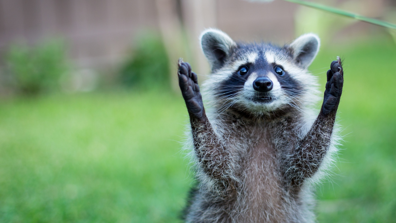 Скачать прикольные картинки о животных с надписями