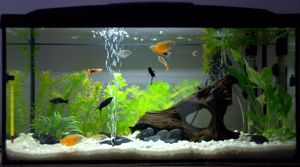Мутная вода в аквариуме - причины и что делать Чего нужно избегать 2