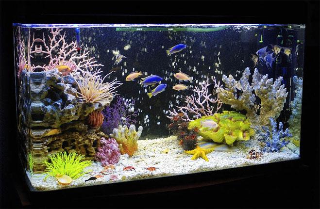Мутная вода в аквариуме - причины и что делать Чего нужно избегать 3