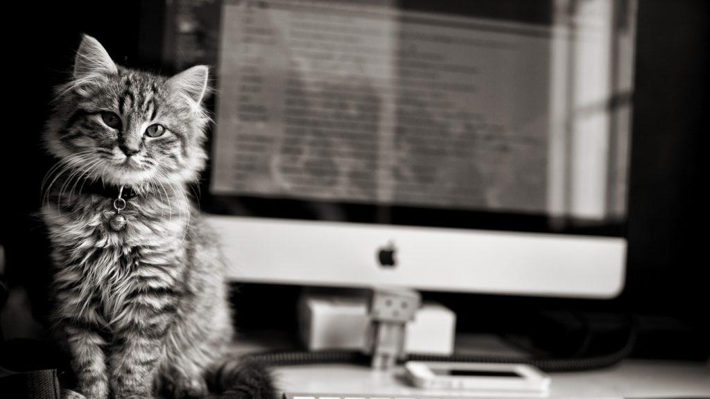 Прикольные и интересные обои животных для компьютера - подборка №3 5