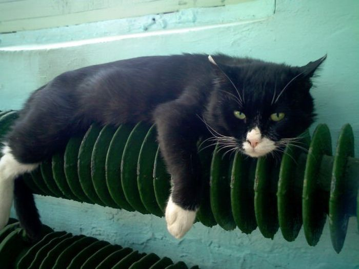 Прикольные котики - самая лучшая подборка фотографий и картинок 10