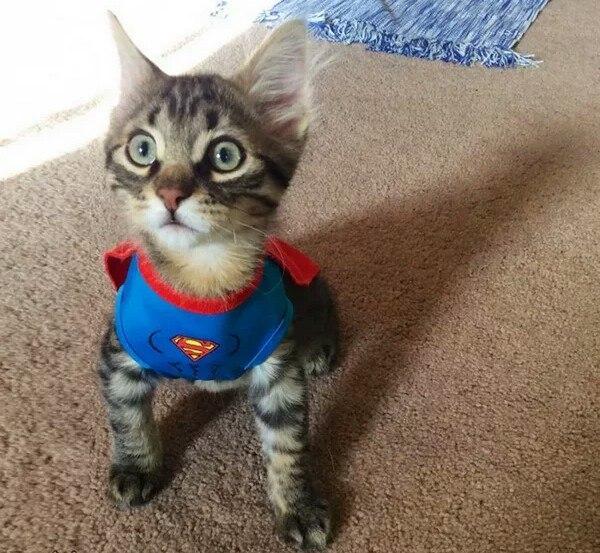 Прикольные котики - самая лучшая подборка фотографий и картинок 15