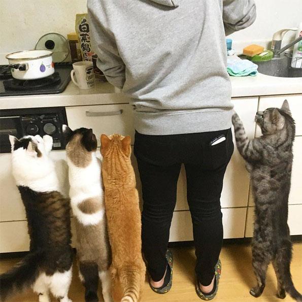 Прикольные котики - самая лучшая подборка фотографий и картинок 5