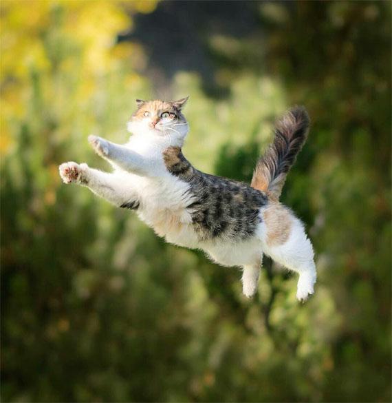 Прикольные котики - самая лучшая подборка фотографий и картинок 6