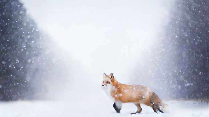 Скачать картинки про зиму и снег - самые красивые и прикольные 5