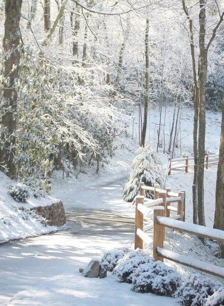 Скачать картинки про зиму и снег - самые красивые и прикольные 9