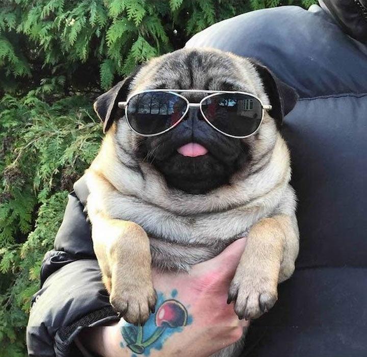 Смешные и прикольные картинки, фото собак - скачать бесплатно №21 13