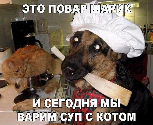 Смешные и прикольные картинки, фото собак - скачать бесплатно №21