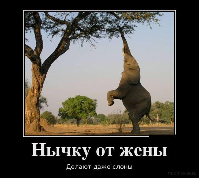 Смешные и ржачные демотиваторы за январь 2018 - подборка №14 6