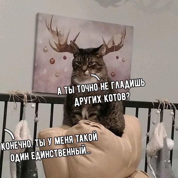 Смешные и ржачные картинки, фото про животных - лучшая коллекция №26 1