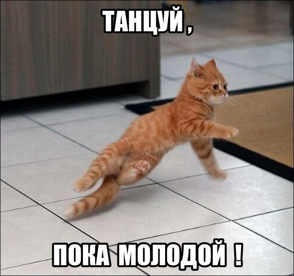 Смешные и ржачные картинки, фото про животных - лучшая коллекция №26 11