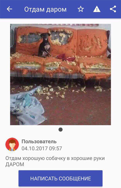 Смешные и ржачные картинки, фото про животных - лучшая коллекция №26 12