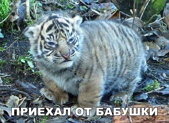 Смешные и ржачные картинки, фото про животных - лучшая коллекция №26 13