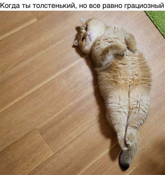 Смешные и ржачные картинки, фото про животных - лучшая коллекция №26 9