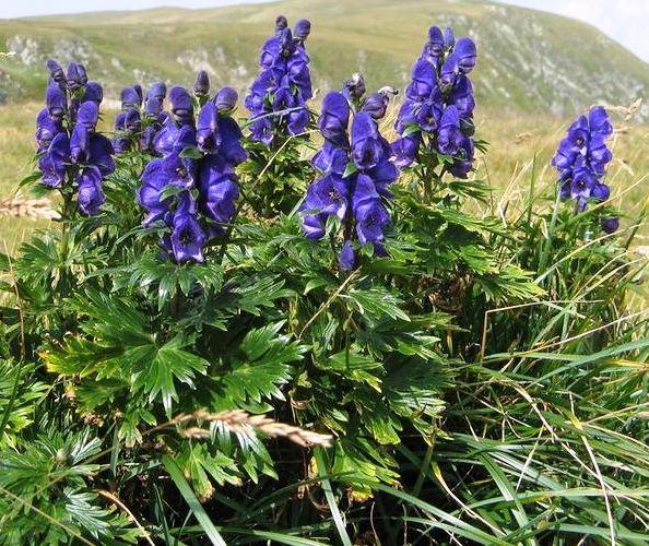 Топ-8 самых ядовитых растений на нашей планете - интересное в мире 1