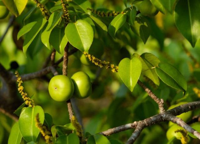 Топ-8 самых ядовитых растений на нашей планете - интересное в мире 7