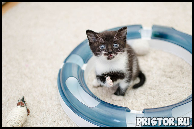 3 грубые ошибки в воспитании котёнка - что важно знать и делать 1