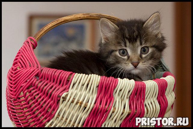 3 грубые ошибки в воспитании котёнка - что важно знать и делать 2
