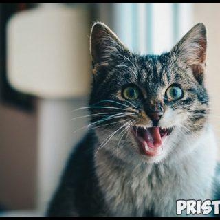 3 грубые ошибки в воспитании котёнка - что важно знать и делать 3