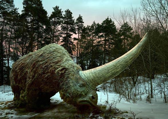 Elasmotherium - огромный волосатый единорог, который обитал на Земле 29 000 лет назад 2