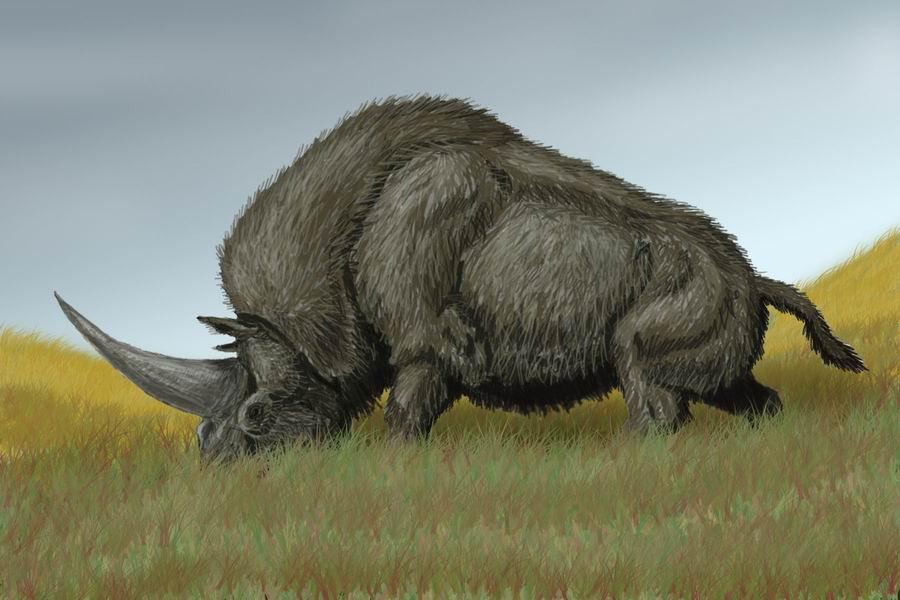 Elasmotherium - огромный волосатый единорог, который обитал на Земле 29 000 лет назад 3