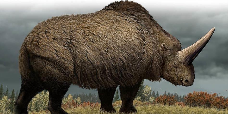 Elasmotherium - огромный волосатый единорог, который обитал на Земле 29 000 лет назад 4