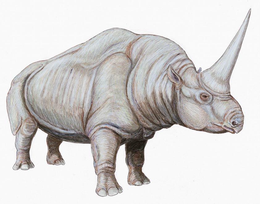 Elasmotherium - огромный волосатый единорог, который обитал на Земле 29 000 лет назад 5