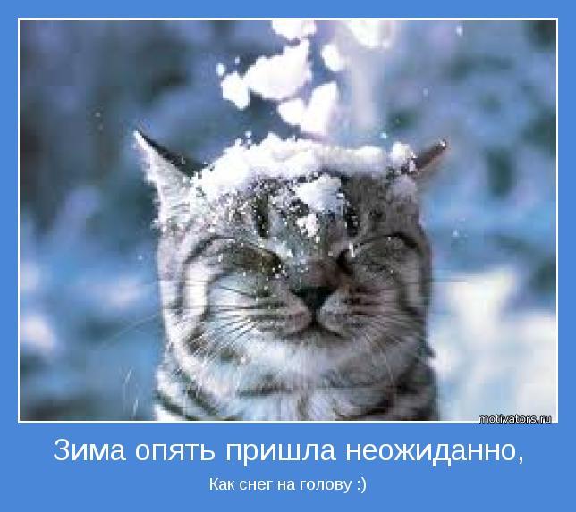 Веселые и смешные картинки про зиму - самая забавная подборка №36 1