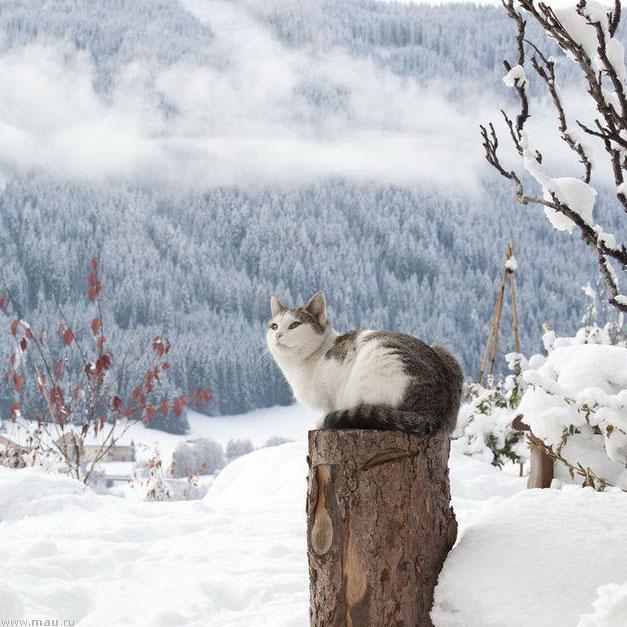 Веселые и смешные картинки про зиму - самая забавная подборка №36 7