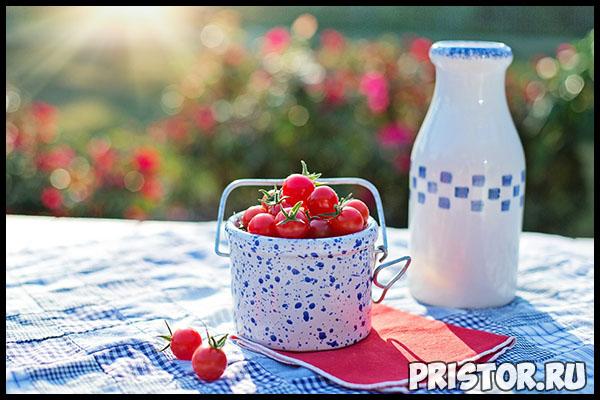 Выращиваем помидоры «черри» в домашних условиях - уход и высадка 1