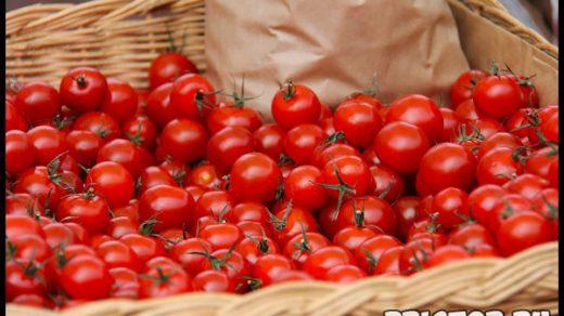 Выращиваем помидоры «черри» в домашних условиях - уход и высадка 2