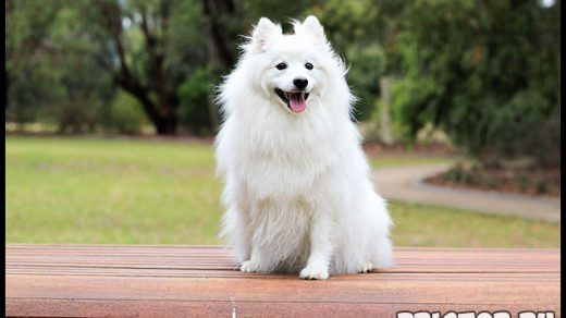Как правильно ухаживать за собакой за типом шерсти в домашних условиях 3