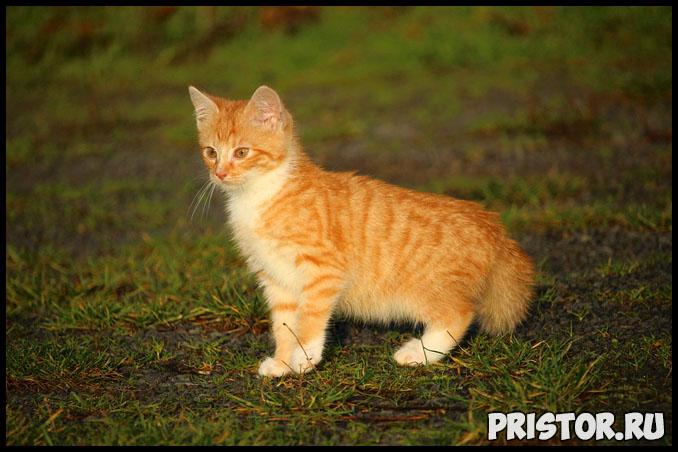 Как приучить котенка к лотку в квартире - основные секреты и способы 1