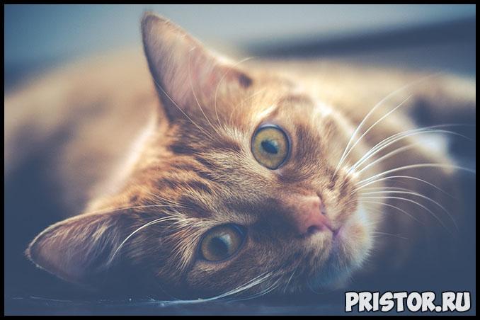 Как приучить котенка к лотку в квартире - основные секреты и способы 2