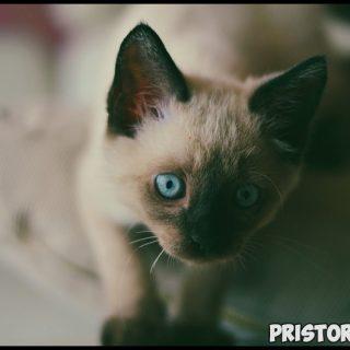 Как приучить котенка к лотку в квартире - основные секреты и способы 3