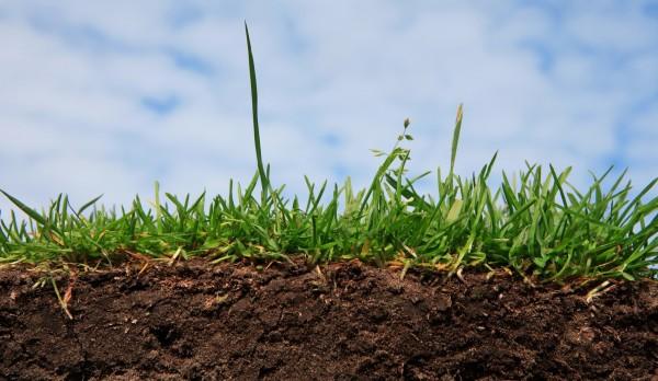 Как снизить кислотность почвы на огороде - несколько рекомендаций 1