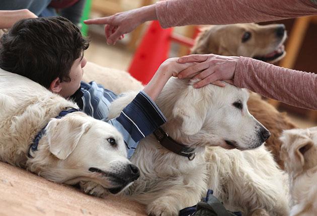 Канистерапия - реабилитация с помощью собак, противопоказания 3