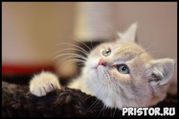 Кожный зуд у кошек - основные причины, что делать в данном случае 1