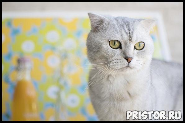 Кожный зуд у кошек - основные причины, что делать в данном случае 2