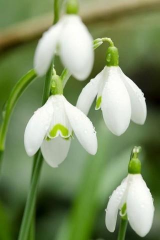 Красивые и прикольные картинки, фото природы на заставку телефона 5