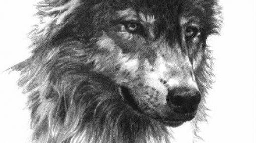 Красивые и прикольные нарисованные картинки животных - лучшая подборка 12