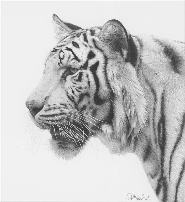 Красивые и прикольные нарисованные картинки животных - лучшая подборка 13