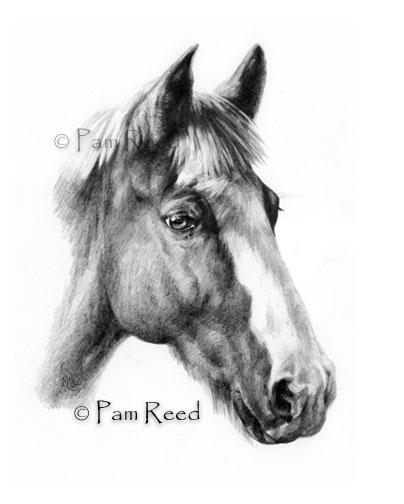 Красивые и прикольные нарисованные картинки животных - лучшая подборка 2