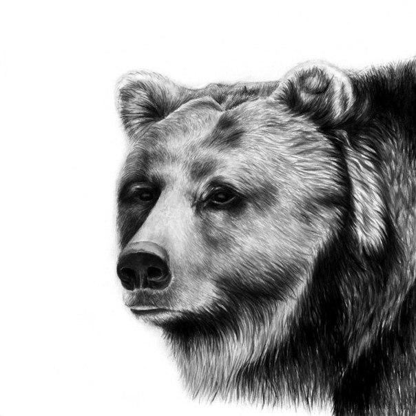 Красивые и прикольные нарисованные картинки животных - лучшая подборка 20