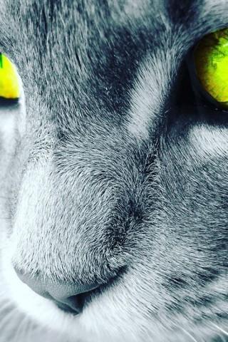 Красивые картинки домашних животных на заставку телефона - подборка 13
