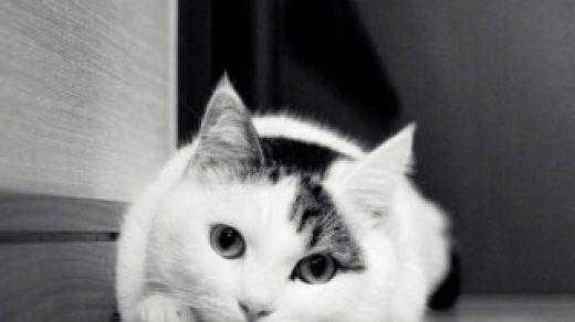 Красивые картинки домашних животных на заставку телефона - подборка 18