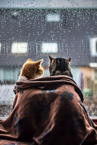 Красивые картинки домашних животных на заставку телефона - подборка 7