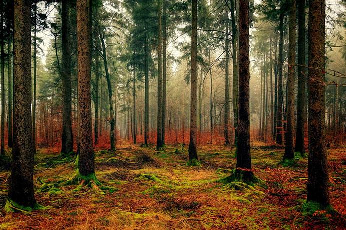 Красивые пейзажи природы фото и картинки - самые удивительные 24